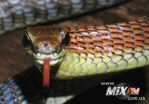 На Земле по непонятным причинам значительно сокращается число змей