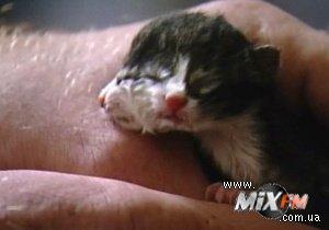 В США родился двуликий котенок