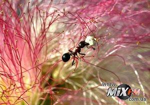 Американец ради искусства убил 200 тысяч муравьев