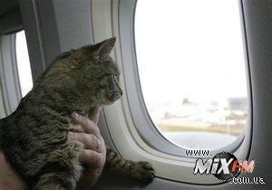 В Шотландии кот подготовит фоторепортаж о музыкальном фестивале